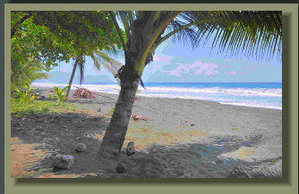 3500 M2 Beach Lot in Carate the Corcovado Park entrance, perfect for residential or low impact Eco Tourism Project.
